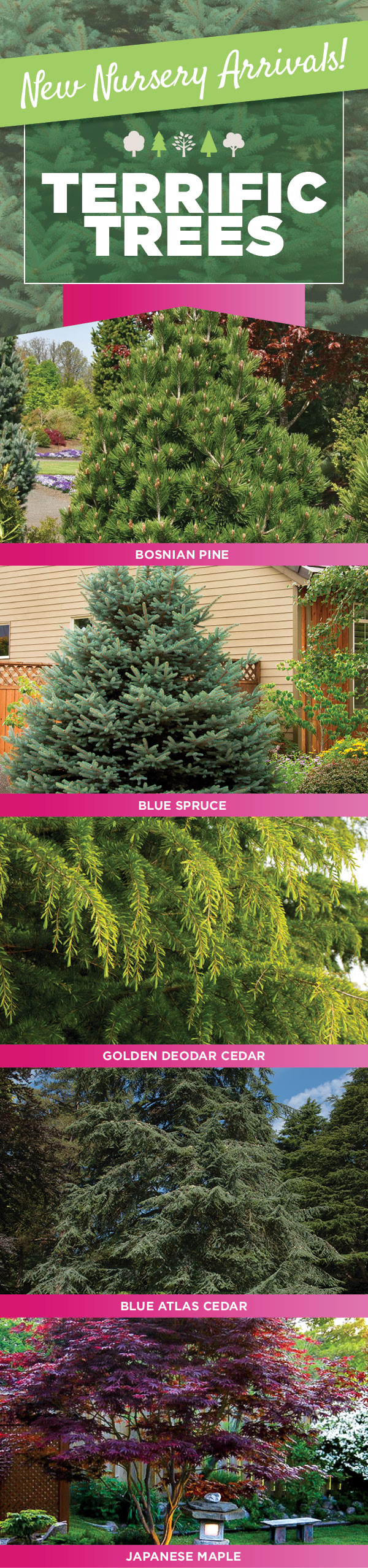 Terrific Trees | TLC Garden Centers