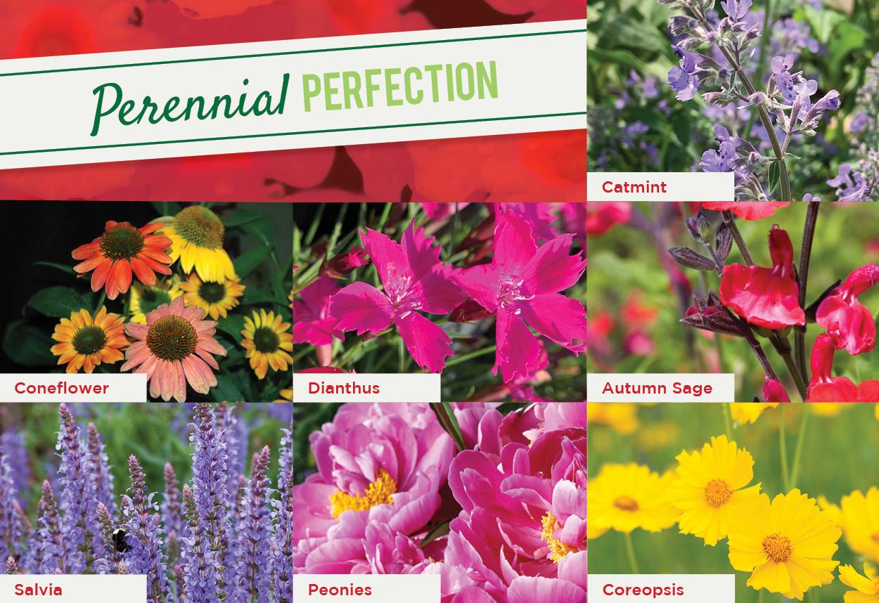 Perennial Perfection | TLC Garden Centers