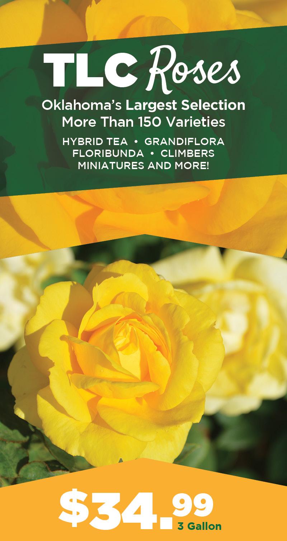 Roses | TLC Garden Centers