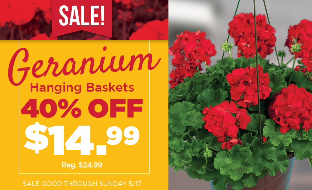 Geranium Baskets Sale | TLC Garden Centers