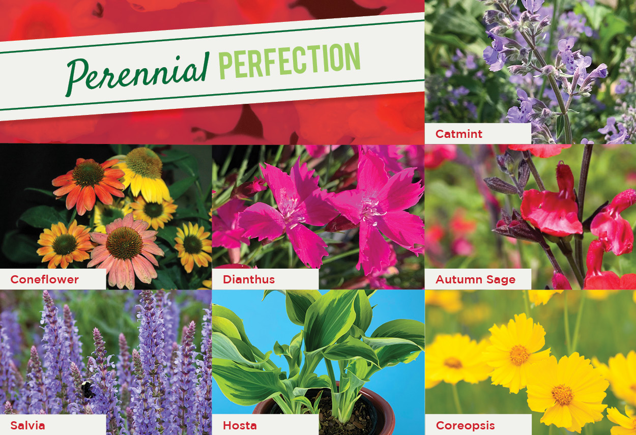 Perennial Perfection | TLC Garden Centers