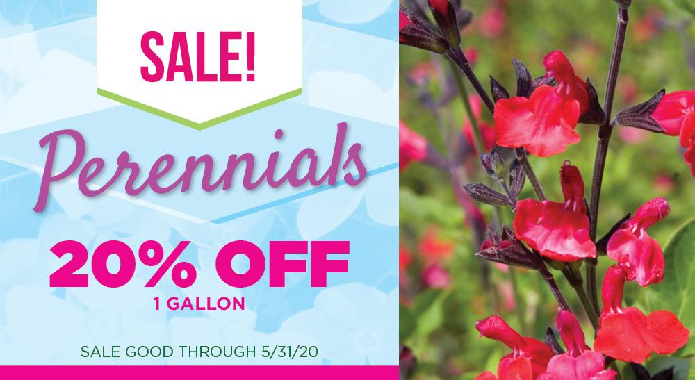 Perennial Sale | TLC Garden Centers