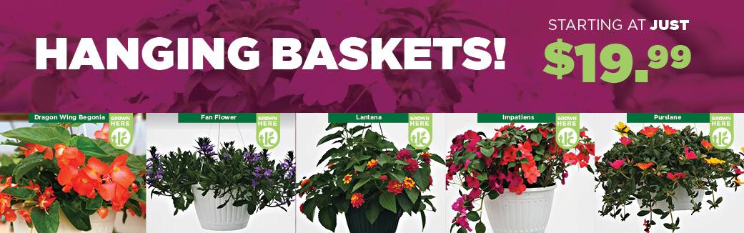 Shade Annuals | TLC Garden Centers