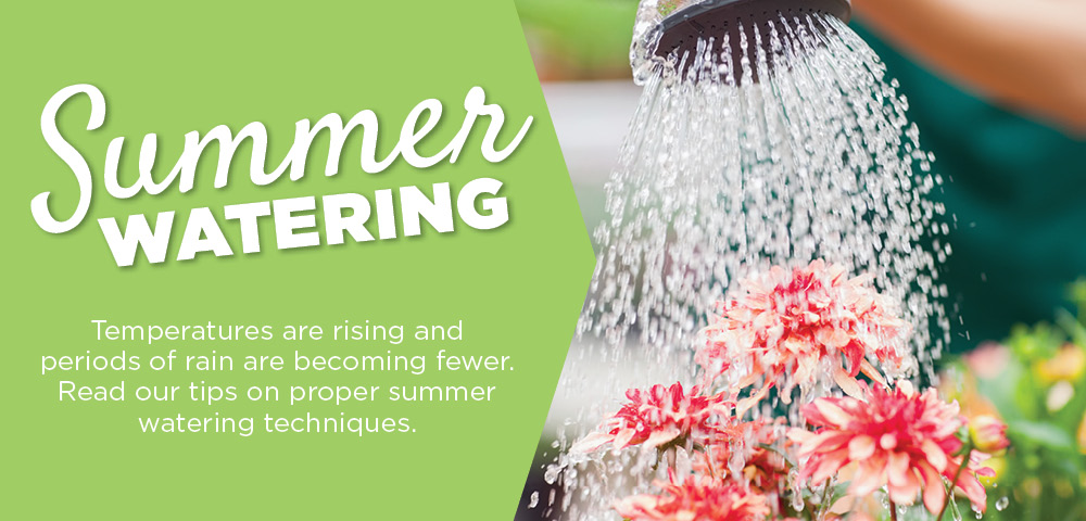 Summer Watering | TLC Garden Center
