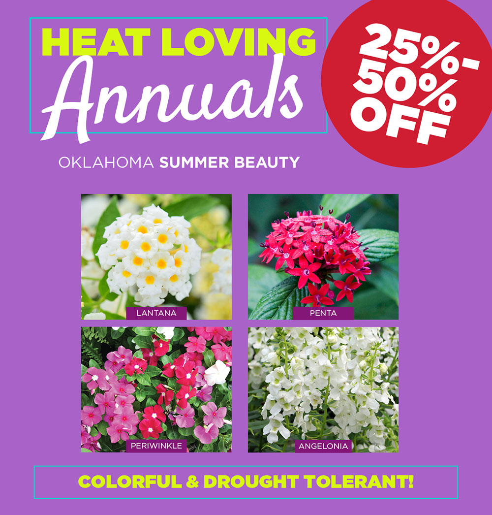 Annuals Sale | TLC Garden Center