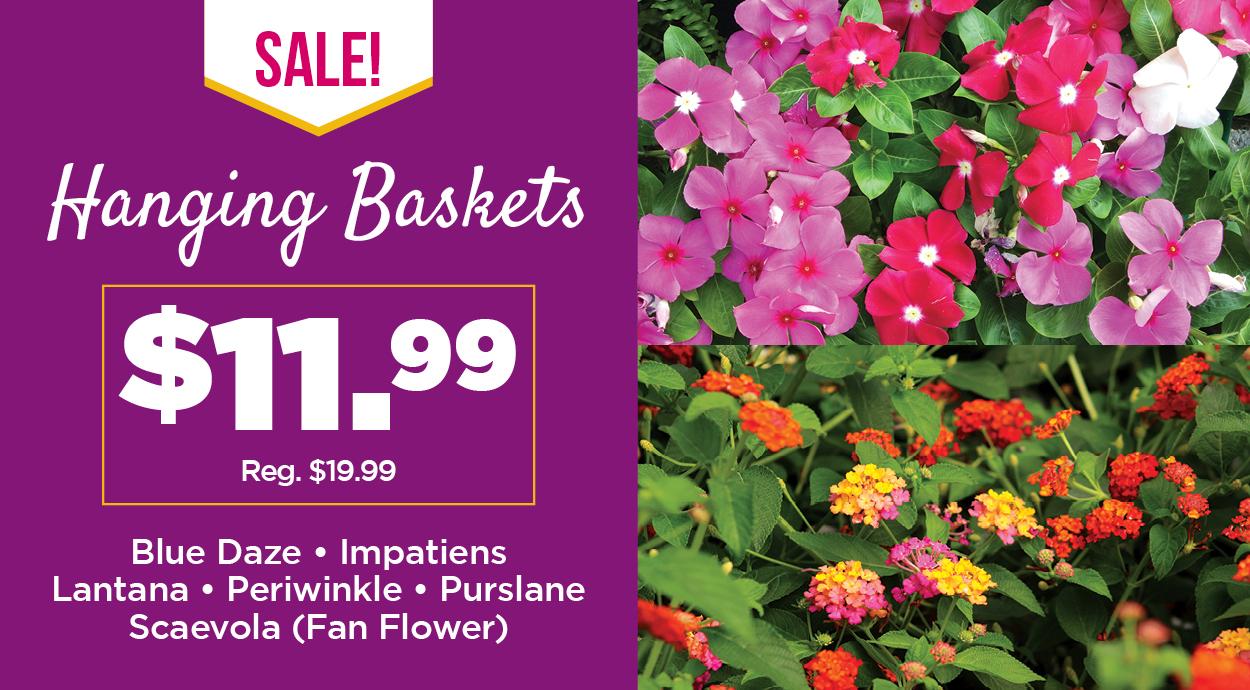 Hanging Plant Baskets Sale | TLC Garden Centers
