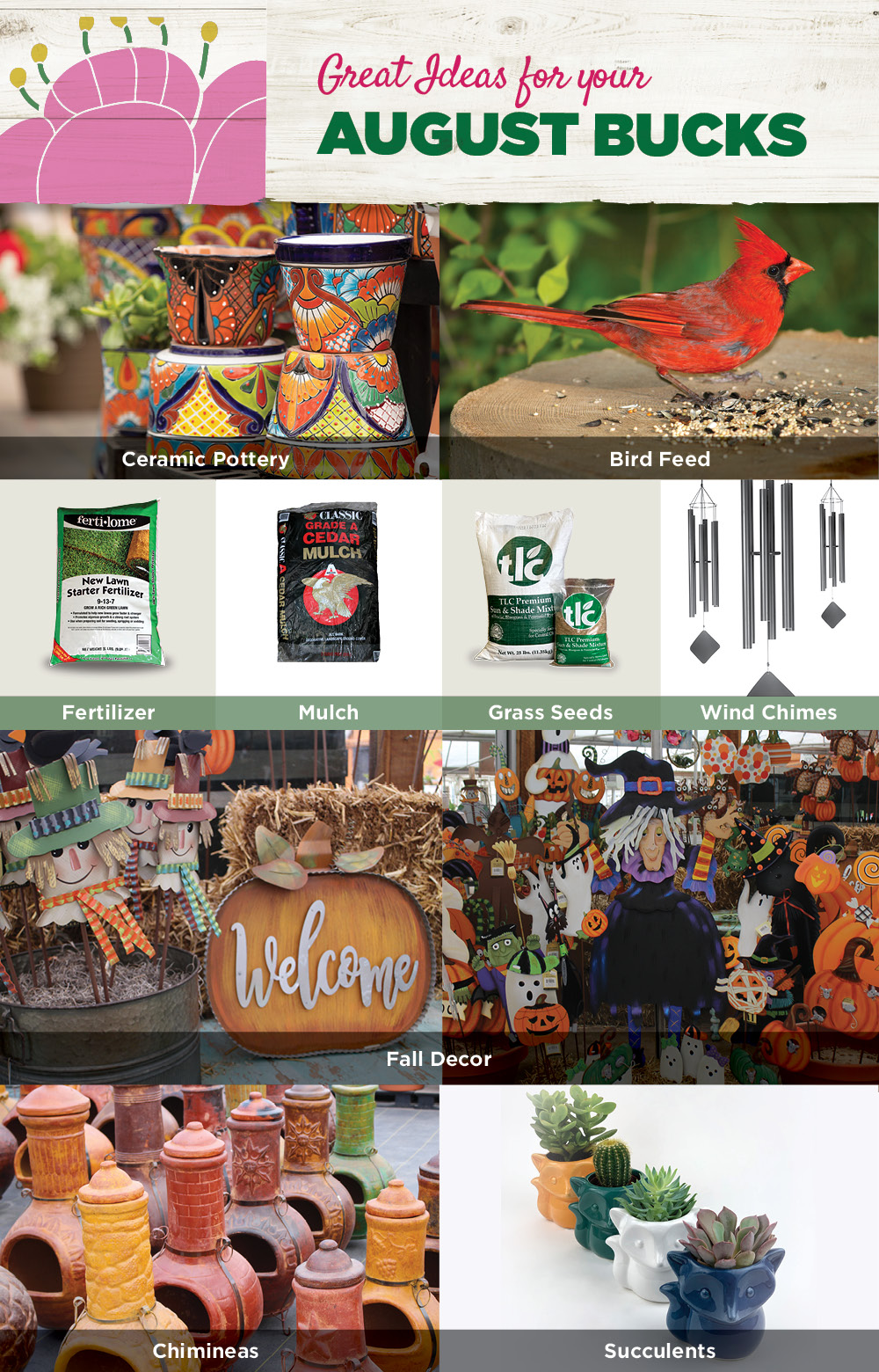 August Bucks Ideas | TLC Garden Centers
