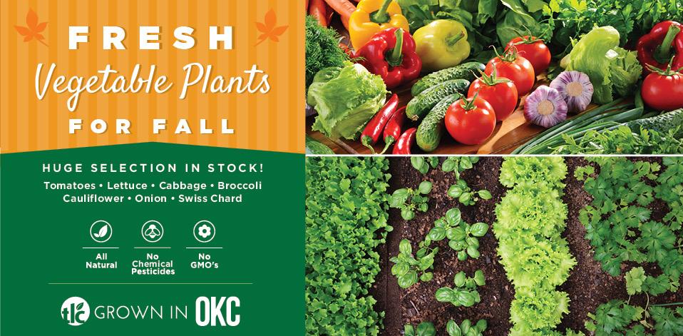 Fall Vegetables | TLC Garden Centers