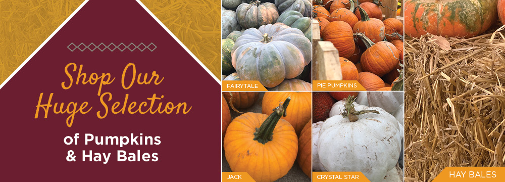 Pumpkins | TLC Garden Center