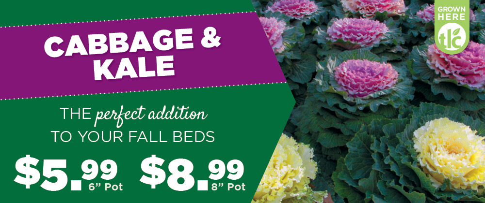 Cabbage & Kale | TLC Garden Center