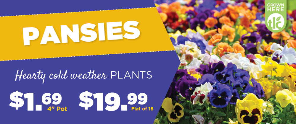 Pansies | TLC Garden Center