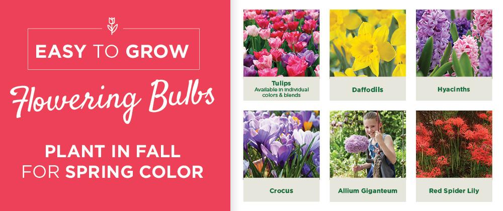 Fall Bulbs | TLC Garden