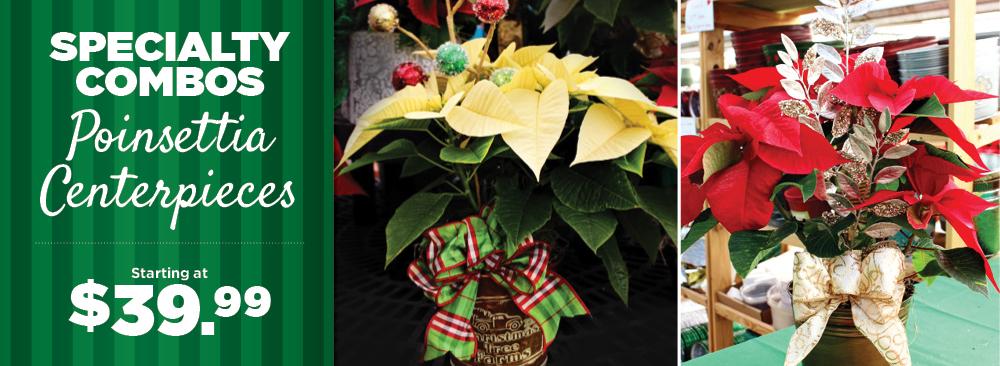 Poinsettia Centerpieces | TLC Garden Centers