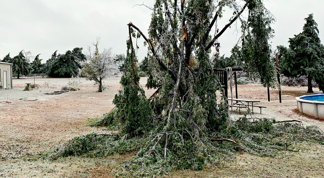 Ice Storm Damage | Will your tree survive? | TLC Garden ...