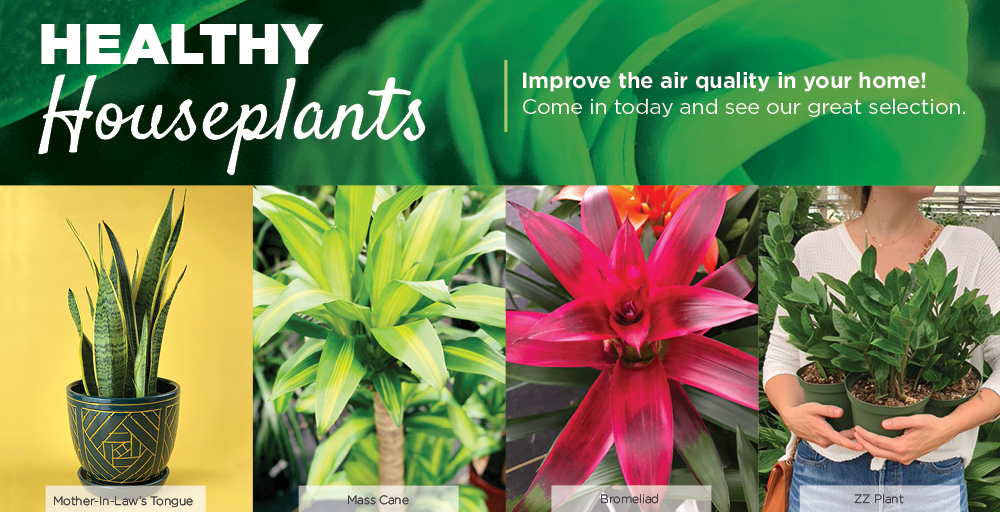 Houseplants | TLC Garden Centers