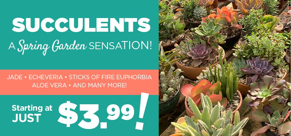 Succulents | TLC Garden Centers