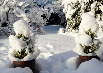 Evaluating Cold Damage to Plants
