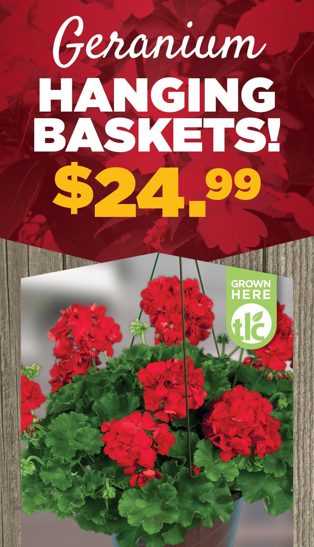 Geranium Hanging Baskets | TLC Garden Centers