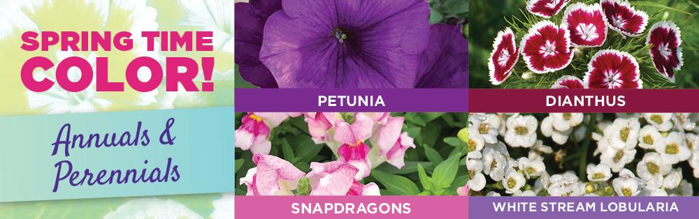 Spring Time Color | TLC Garden Centers