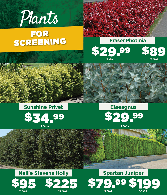 Plants for Screening | TLC Garden Centers
