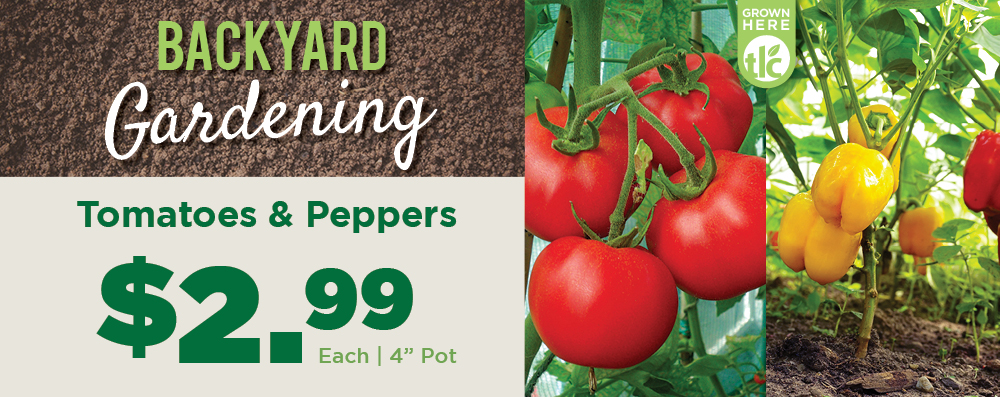 Tomatoes and Peppers | TLC Garden Centers
