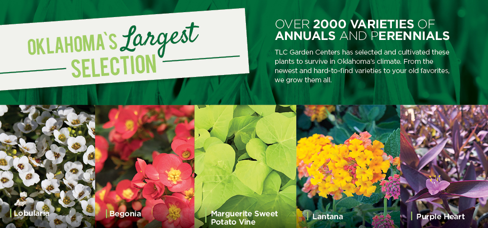 Oklahoma's Largest Selection | TLC Garden Centers