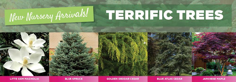Terrific Trees | TLC Garden Centers