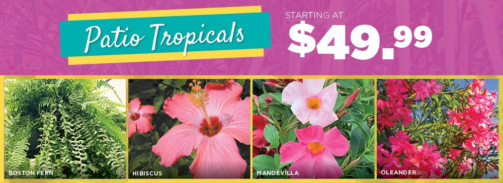 Patio Tropicals | TLC Garden Centers