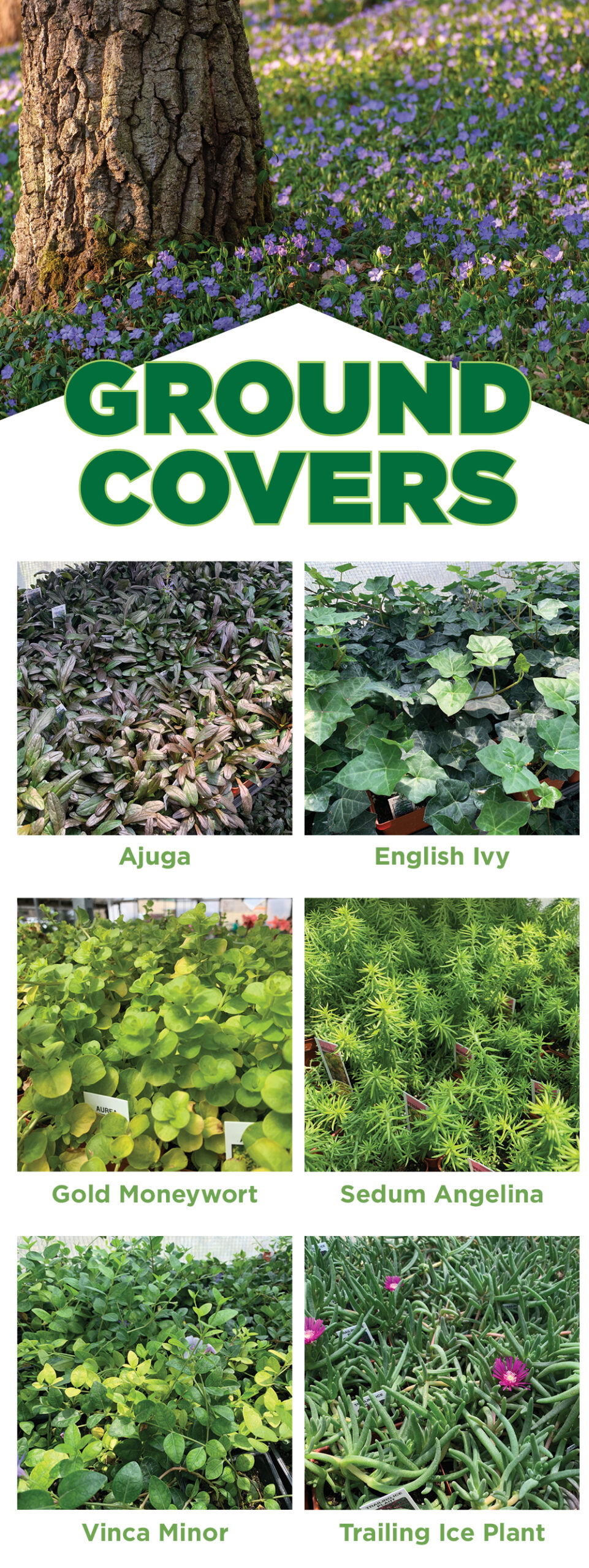 Ground Covers | TLC Garden Centers