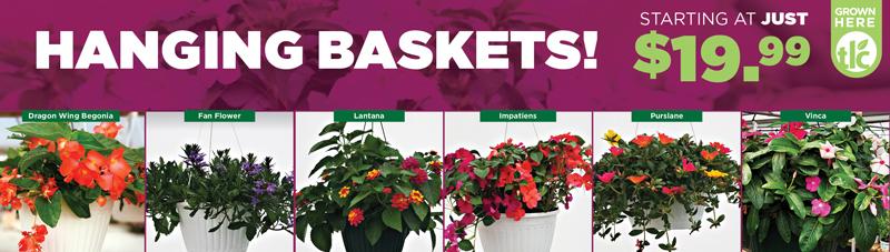 Hanging Baskets | TLC Garden Centers