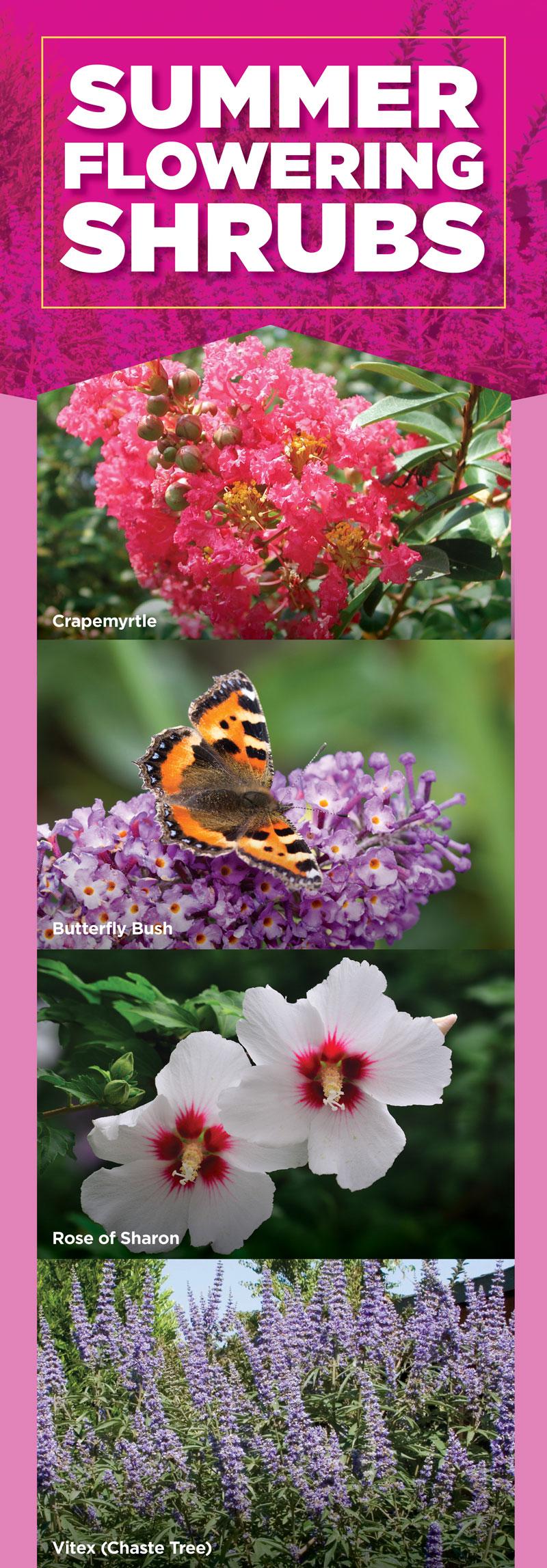 Summer Flowering Shrubs | TLC Garden Centers