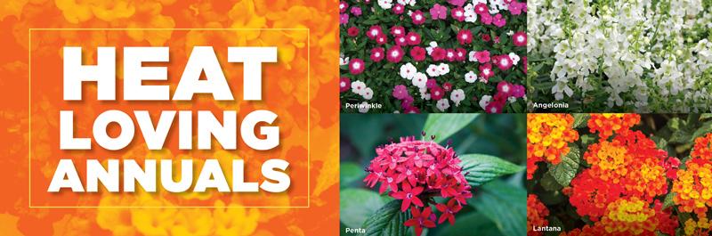 Heat Loving Annuals | TLC Garden Centers