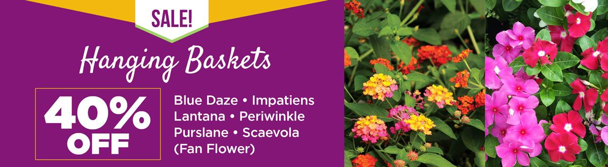 Hanging Basket Sale | TLC Garden Centers