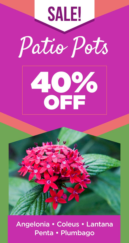 Patio Pots Sale | TLC Garden Centers