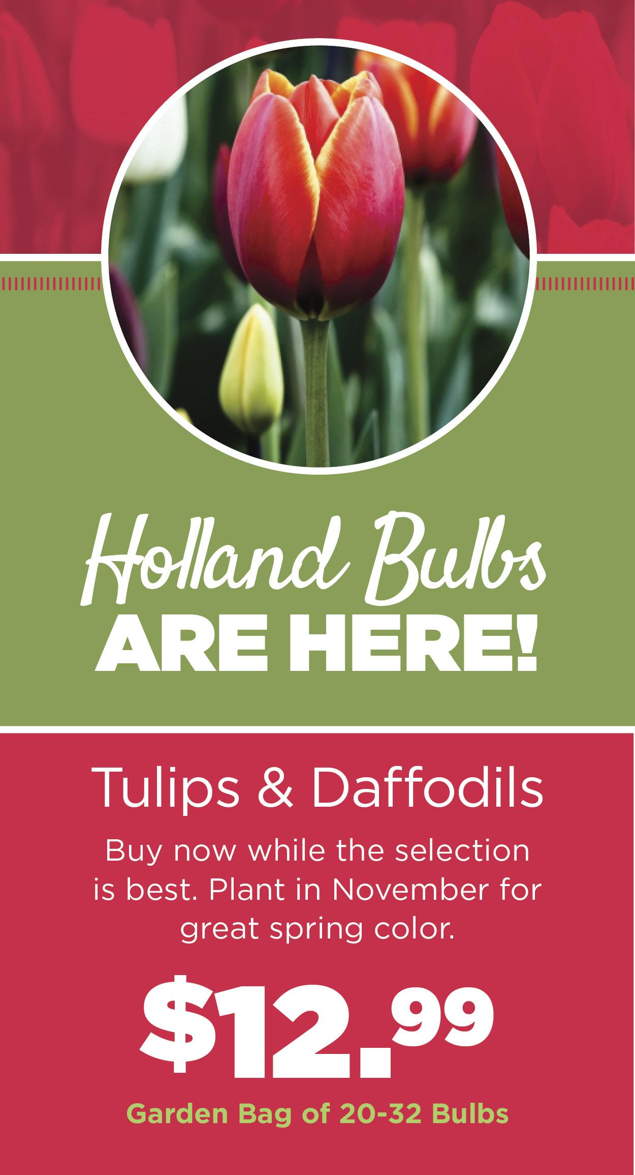 Holland Bulbs Are Here   TLC